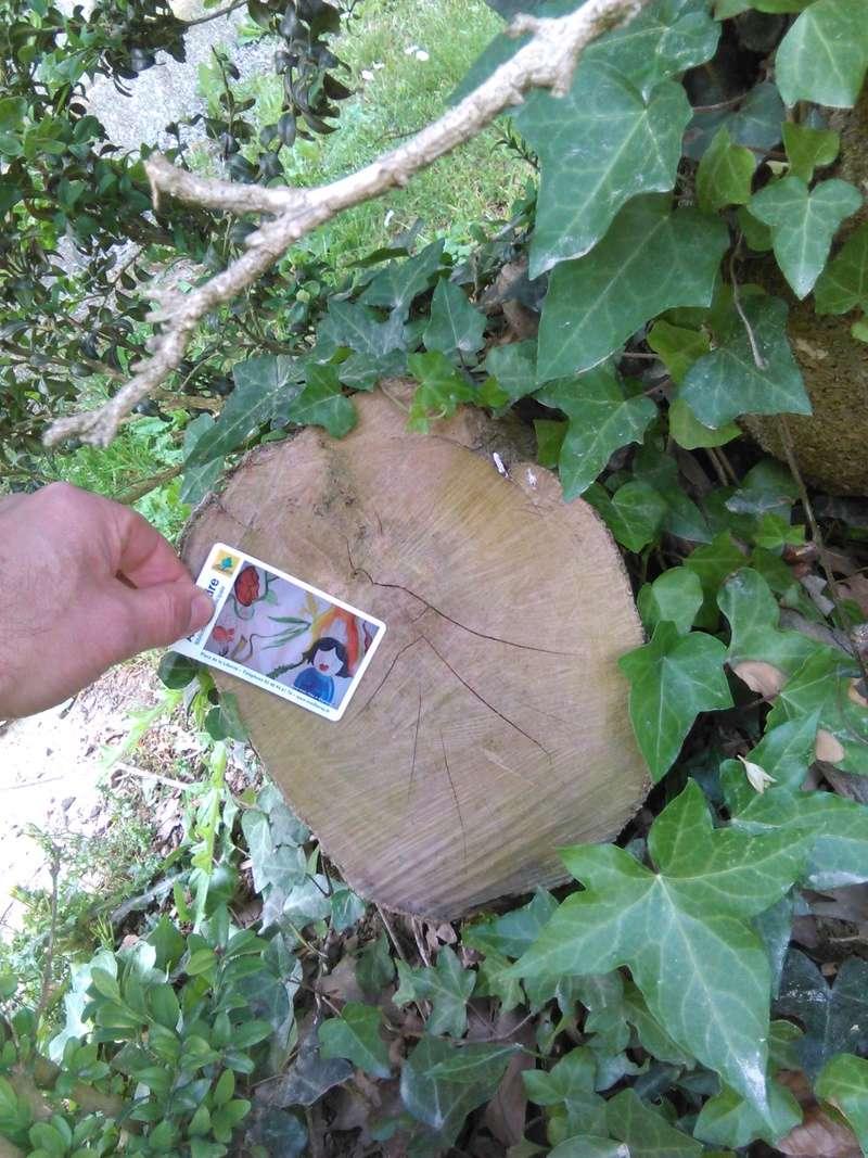 Apprendre à reconnaitre les arbres qui nous entourent Img_2053