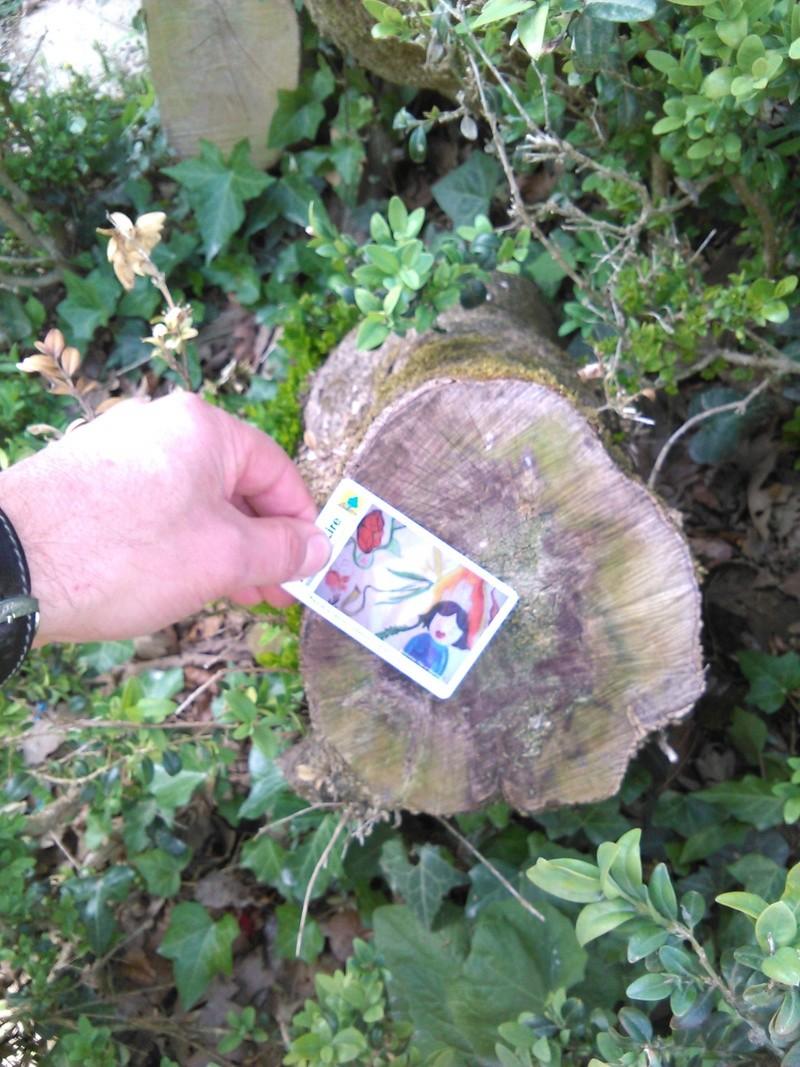 Apprendre à reconnaitre les arbres qui nous entourent Img_2059