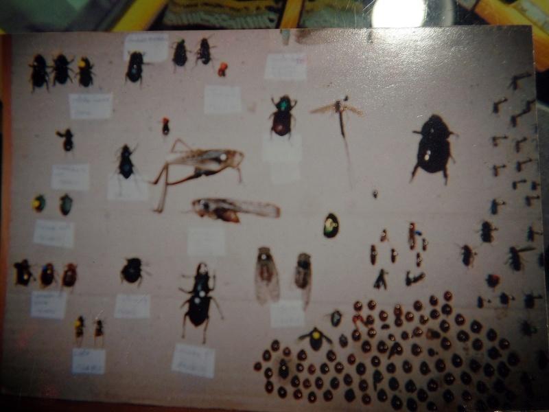 Evolution de la collection entomologique Collec10
