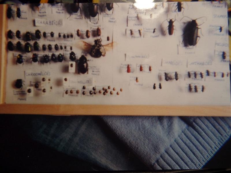 Evolution de la collection entomologique Collec11