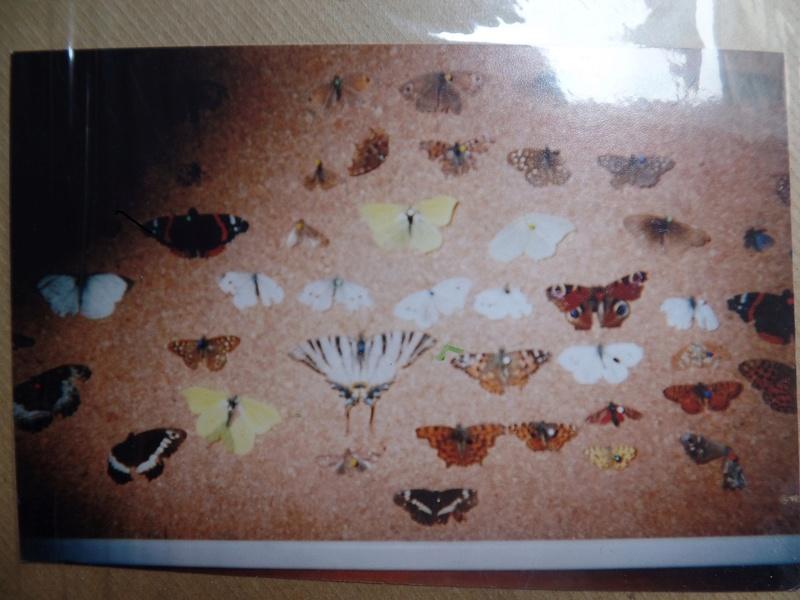 Evolution de la collection entomologique Collec13