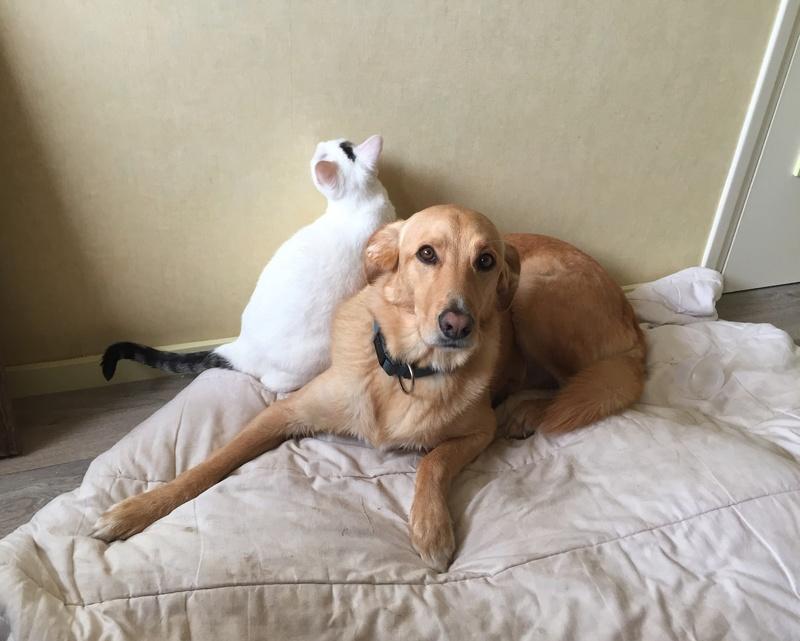 lois - Loïs - chatte blanche et noire - née en mai 2016 Img_8612