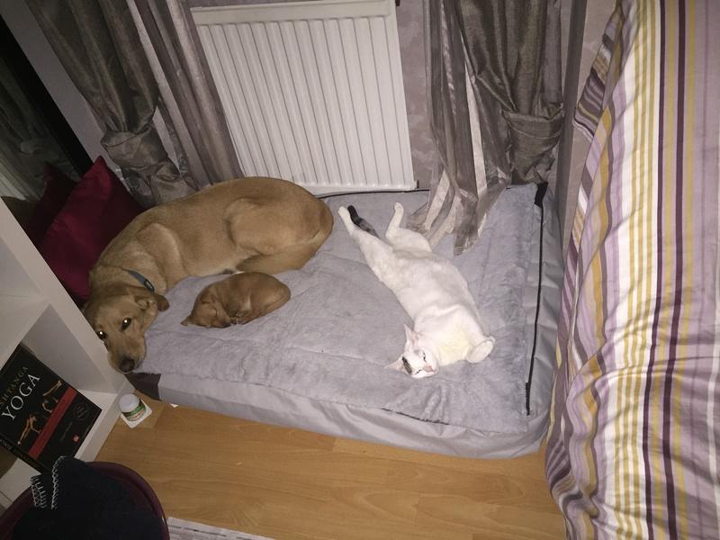 lois - Loïs - chatte blanche et noire - née en mai 2016 Img_8911