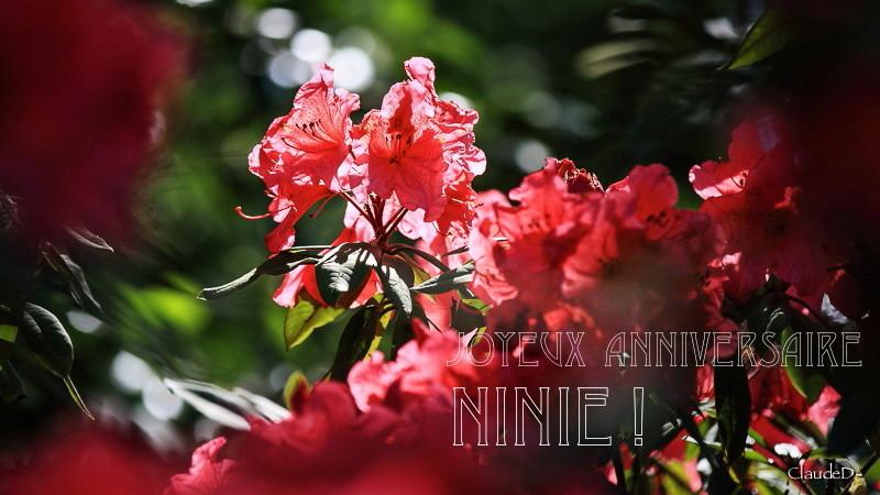 Pour Ninie Annini10