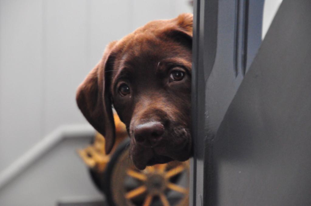 Des connaisseurs en chiens ?  - Page 4 Dsc_0310