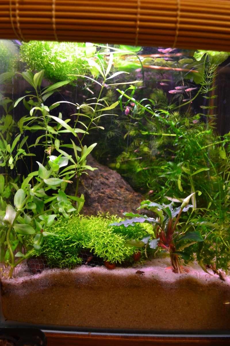 besoin de votre aide pour mon aquarium de 130 l - Page 7 Dsc_0010