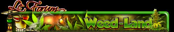 Récolte de Cannabis/Blé  Bannie10