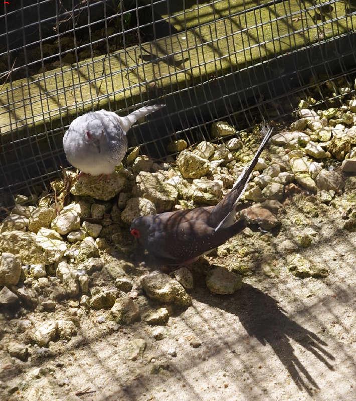Parc Animalier de la Ferme de Magné, toujours plus beau ! Imgp8210