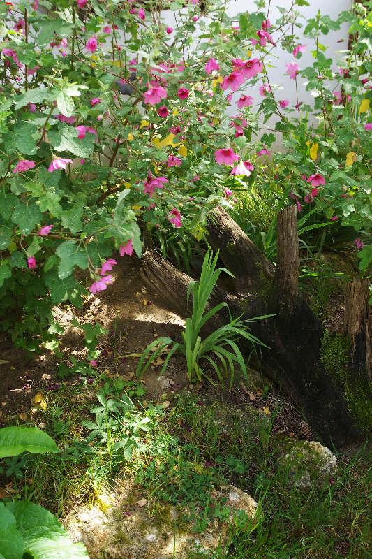 Parc Animalier de la Ferme de Magné, toujours plus beau ! Imgp8212