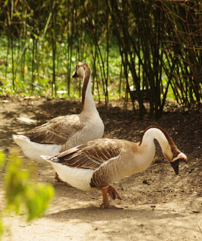 Parc Animalier de la Ferme de Magné, toujours plus beau ! Imgp8311