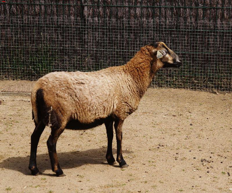 Parc Animalier de la Ferme de Magné, toujours plus beau ! Imgp8313