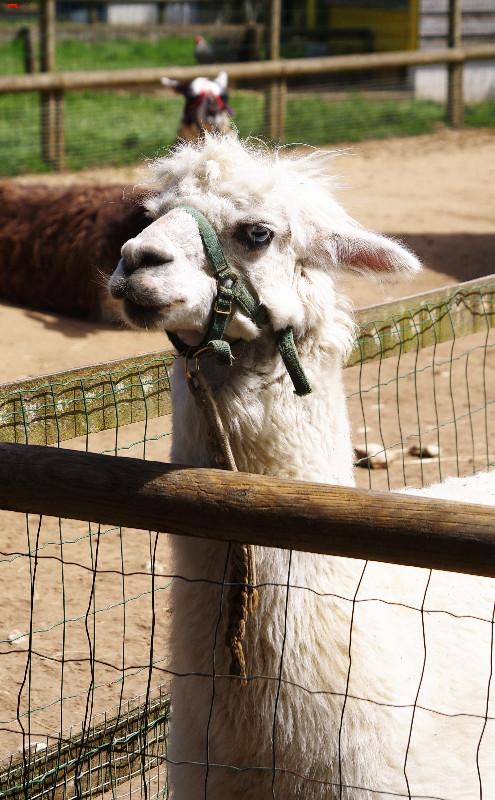 Parc Animalier de la Ferme de Magné, toujours plus beau ! Imgp8410