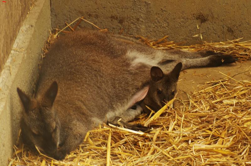 Parc Animalier de la Ferme de Magné, toujours plus beau ! Imgp8411