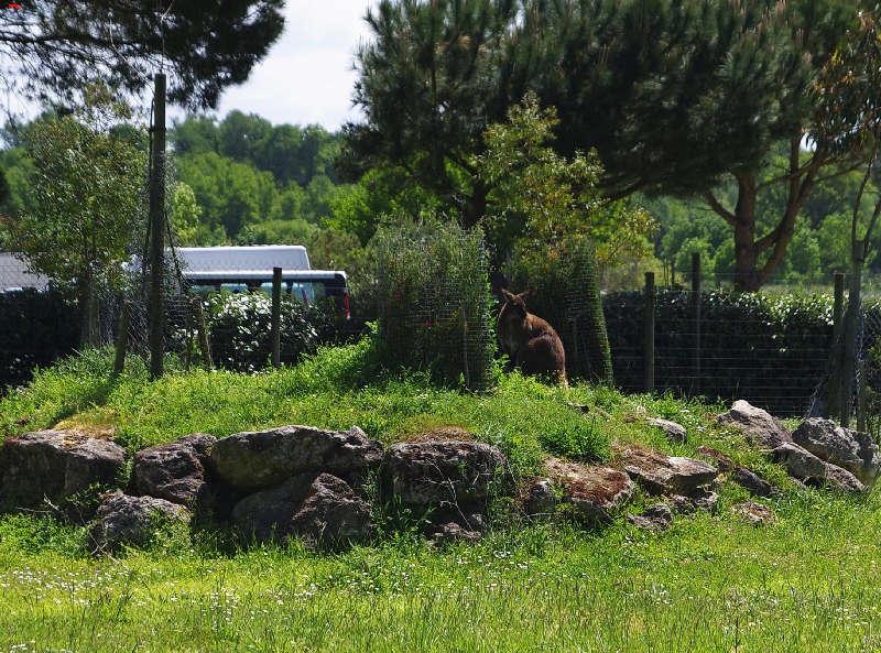 Parc Animalier de la Ferme de Magné, toujours plus beau ! Imgp8412