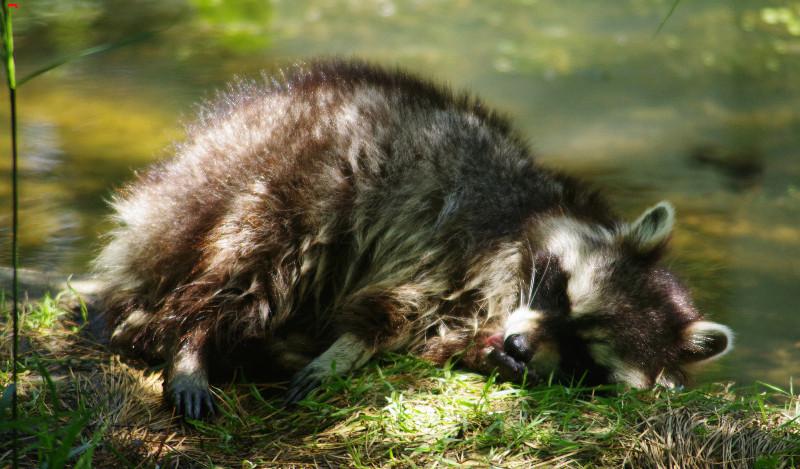 Parc Animalier de la Ferme de Magné, toujours plus beau ! Imgp8413