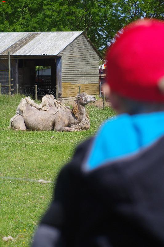 Parc Animalier de la Ferme de Magné, toujours plus beau ! Imgp8414