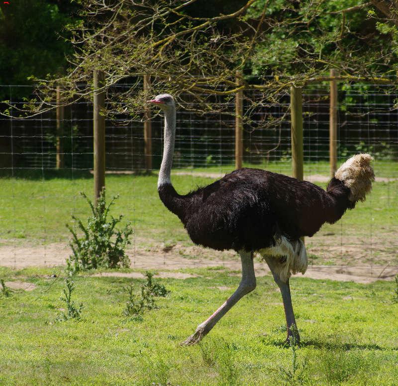 Parc Animalier de la Ferme de Magné, toujours plus beau ! Imgp8416