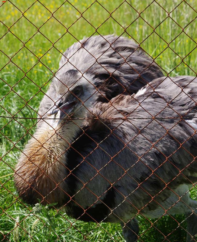 Parc Animalier de la Ferme de Magné, toujours plus beau ! Imgp8513
