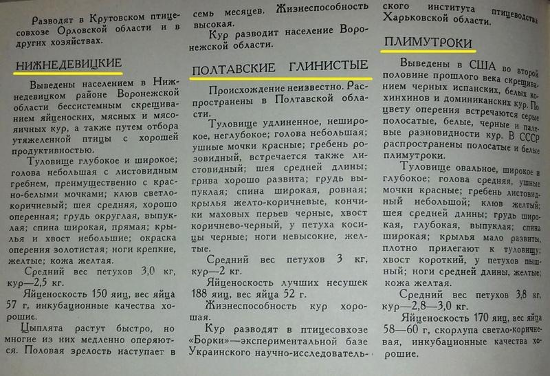 Порода кур Полтавская глинистая - Страница 10 0416
