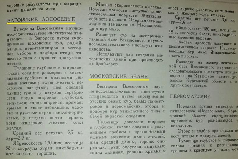 Загорская лососевая порода кур - Страница 4 0514