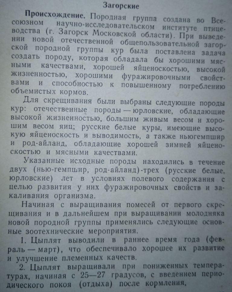 Загорская лососевая порода кур - Страница 4 111