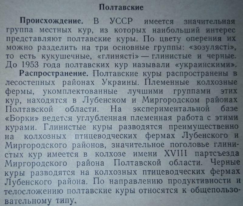 Порода кур Полтавская глинистая - Страница 10 112