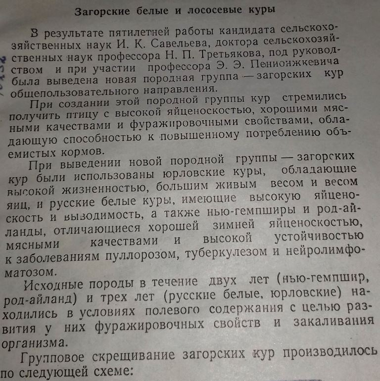 Загорская лососевая порода кур - Страница 4 115