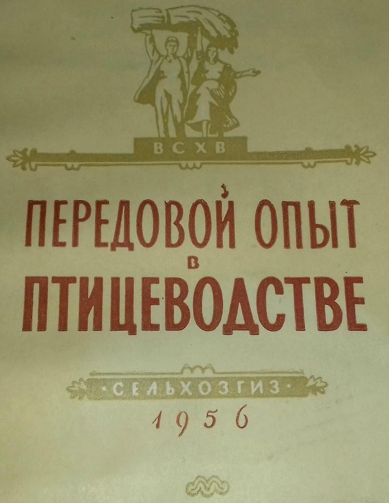 Загорская лососевая порода кур - Страница 4 116