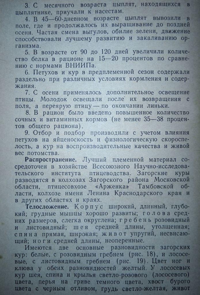 Загорская лососевая порода кур - Страница 4 211
