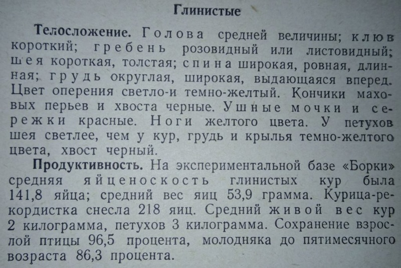 Порода кур Полтавская глинистая - Страница 10 212