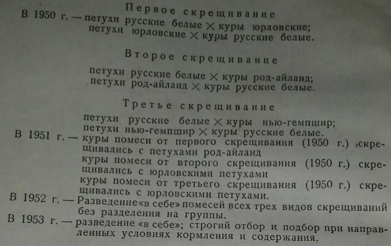Загорская лососевая порода кур - Страница 4 214