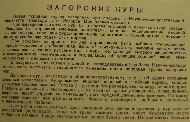 Загорская лососевая порода кур - Страница 4 2411