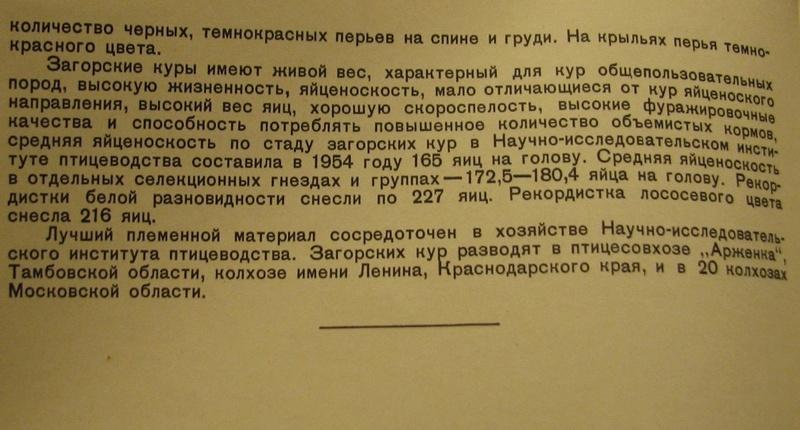 Загорская лососевая порода кур - Страница 4 2511