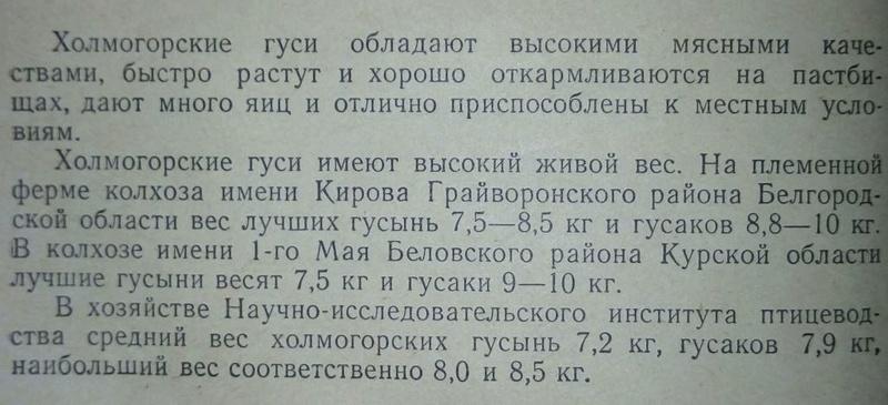 Гуси холмогорской породы - Страница 22 2612