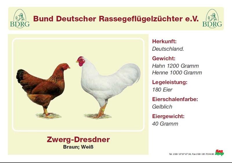 Карликовая дрезденская порода кур, Dresden bantam chickens 26678110