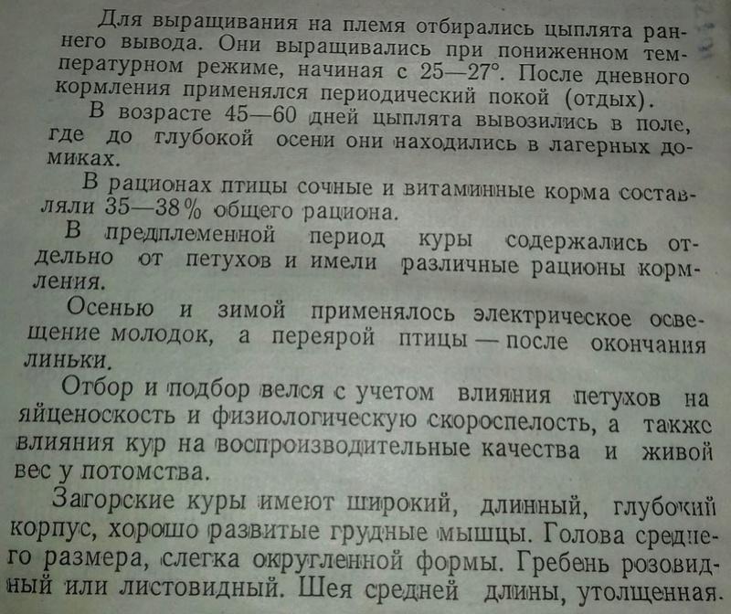 Загорская лососевая порода кур - Страница 4 314