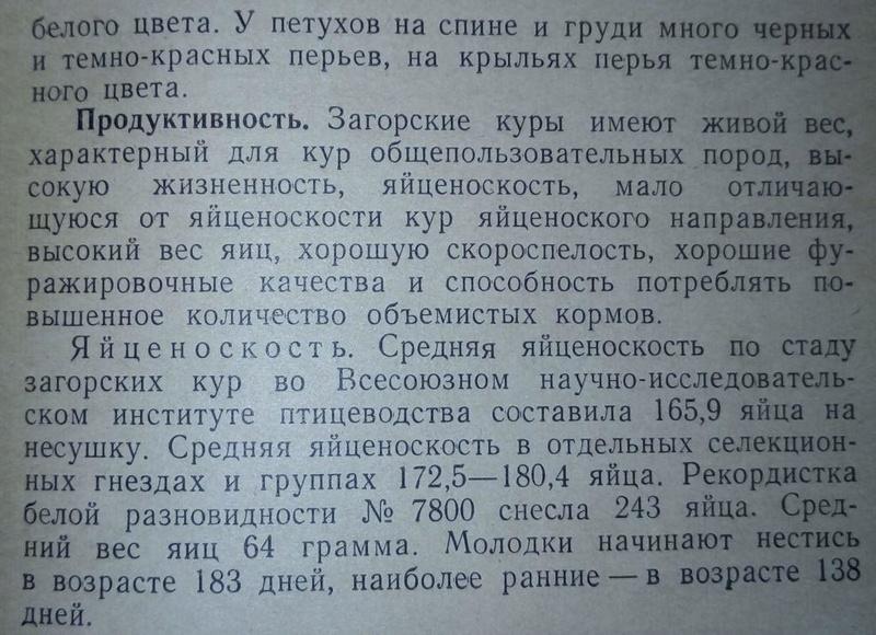 Загорская лососевая порода кур - Страница 4 411