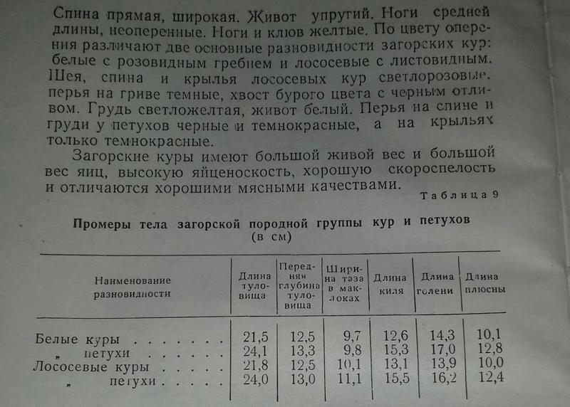 Загорская лососевая порода кур - Страница 4 6-110