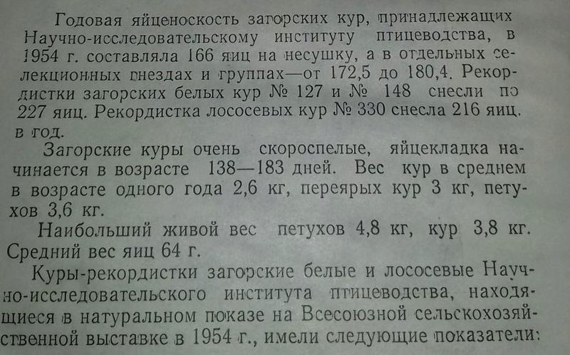 Загорская лососевая порода кур - Страница 4 6-210