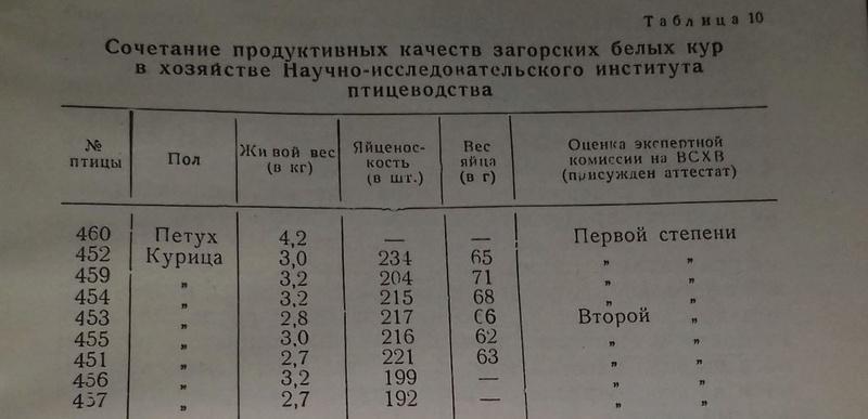 Загорская лососевая порода кур - Страница 4 7-110