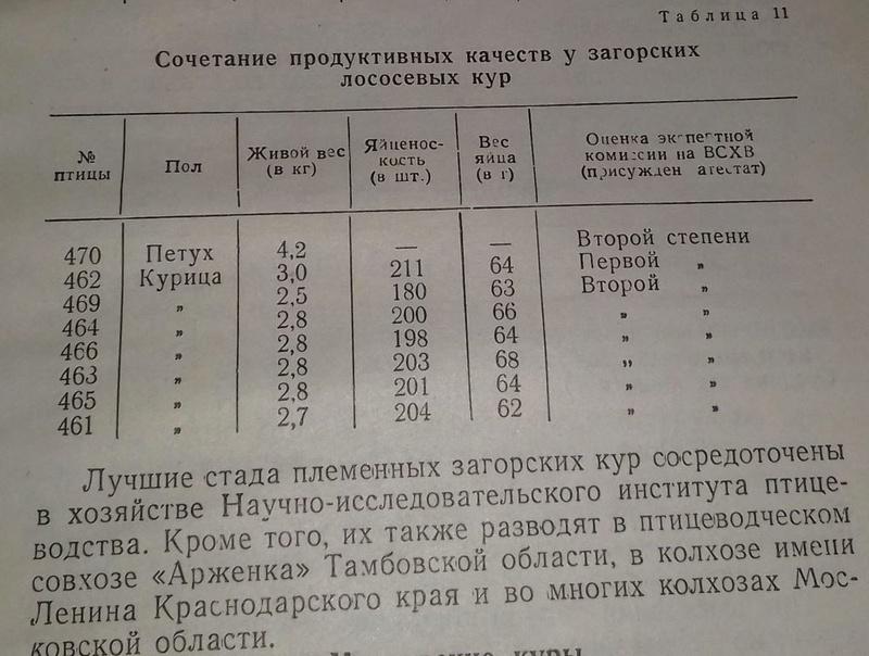 Загорская лососевая порода кур - Страница 4 7-210