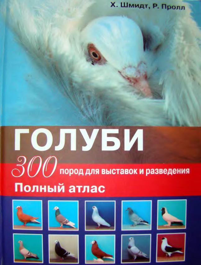 Породы голубей Image167