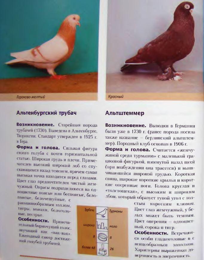 Породы голубей Image168