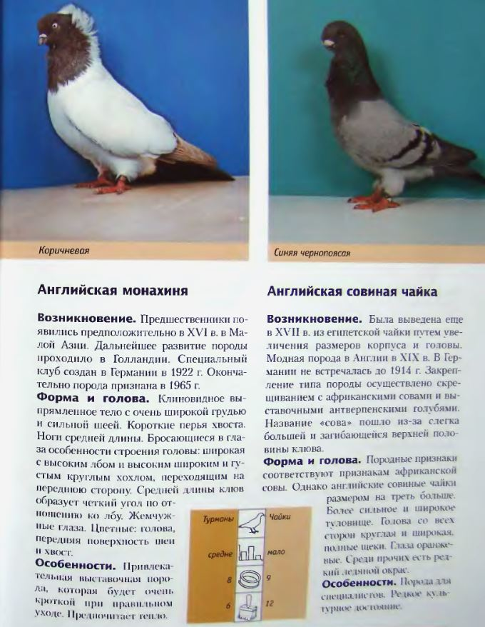 Породы голубей Image170