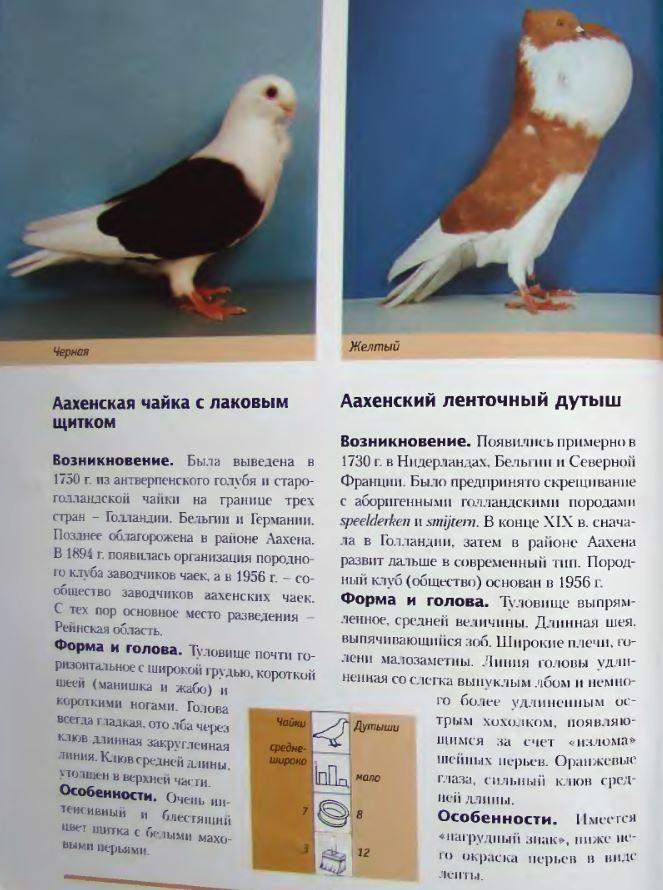 Породы голубей Image173