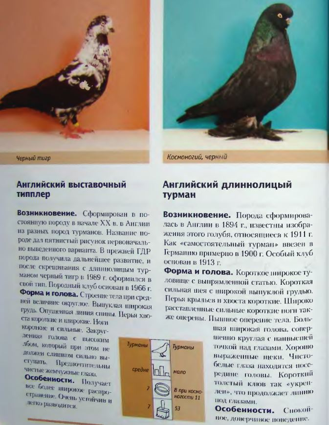 Породы голубей Image174