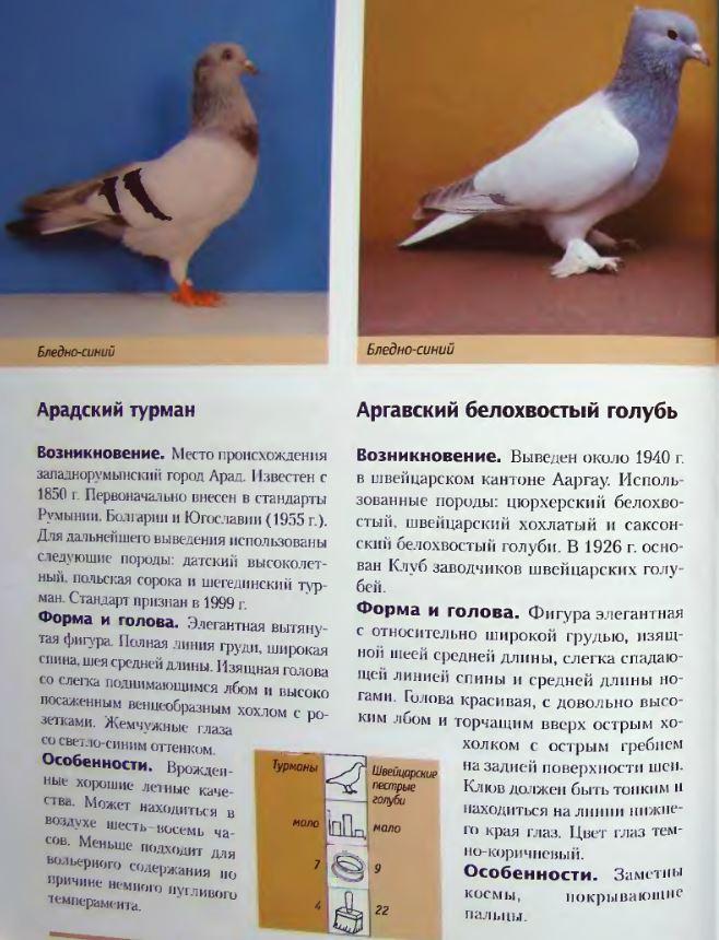 Породы голубей Image178