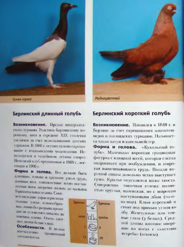 Породы голубей Image182