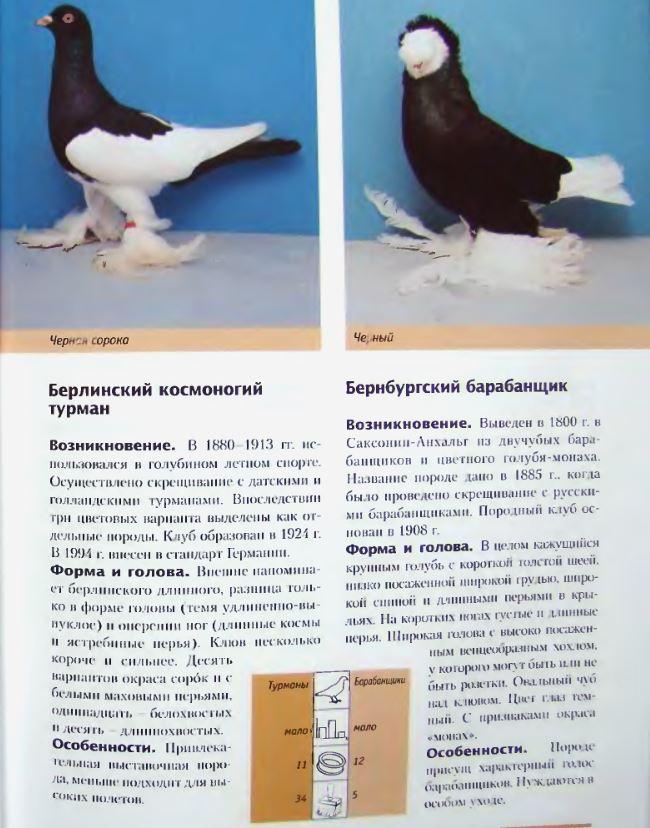 Породы голубей Image185