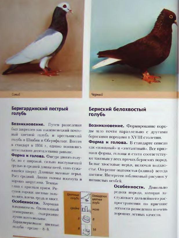 Породы голубей Image188